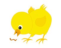 Chick. Cute little yellow chick isolated on white background royalty free illustration
