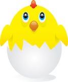 Chick Stock Photos
