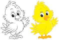 Free Chick Stock Photos - 34765043