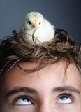 Chick royalty free stock image