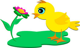 Chick Admiring a Flower Stock Image