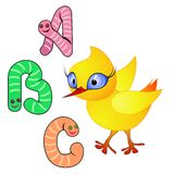 Chick and alphabet Stock Image