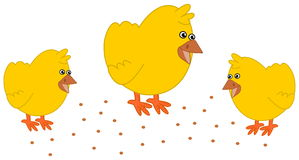 Chick in barnyard pecking stock illustration