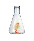 Chick in bottle Stock Photography
