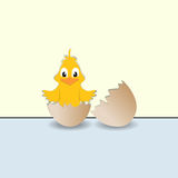 Chick and broken egg Royalty Free Stock Images