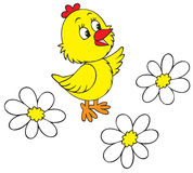 Chick and camomiles Stock Photos