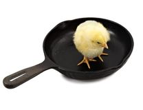 Chick on a cast iron pan Royalty Free Stock Photo