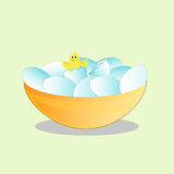 Chick climbs from the broken eggs. Royalty Free Stock Images