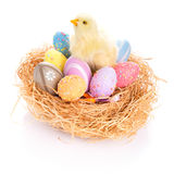 Easter eggs and chick in the nest. Chick and colorful Easter eggs in the nest Stock Photo