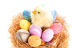 Easter eggs and chick in the nest. Chick and colorful Easter eggs in the nest Royalty Free Stock Image