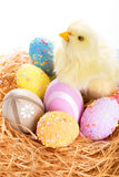 Easter eggs and chick in the nest. Chick and colorful Easter eggs in the nest Stock Image