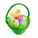 Chick and Easter basket with eggs Stock Photos