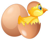 Chick comes out of egg Royalty Free Stock Images