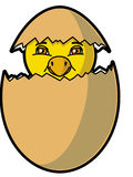 Chick coming out of the egg. Vector Chick coming out of the egg Royalty Free Illustration