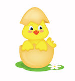 Chick Royalty Free Stock Photos