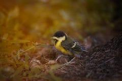 Chick& del paro Imágenes de archivo libres de regalías