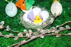 Chick and Easter egg stock photos