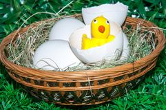 Chick and Easter egg stock photography