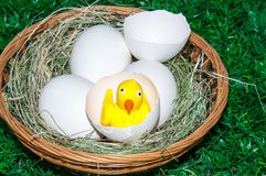 Chick and Easter egg stock photo