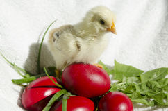 Chick and easter eggs Stock Photography