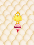 Chick in the Easter eggs Stock Images