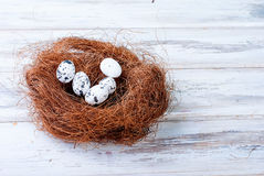 Chick and Easter eggs in the nest Royalty Free Stock Photos