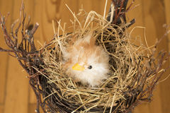 Chick in easter nest Royalty Free Stock Images
