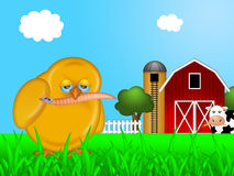 Chick Eating Worm in Farm Stock Photos