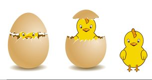 Chick and egg Royalty Free Stock Images