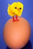 Chick on an egg Royalty Free Stock Photos