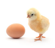 Chick and egg Royalty Free Stock Photography