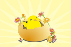 Chick with egg Stock Images
