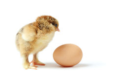 Chick and egg Royalty Free Stock Photo