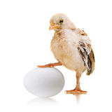 Chick and egg Stock Photos