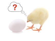 Chick and egg with question mark in thinking balloon Stock Photos