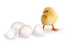 Chick and eggs. Little fluffy yellow easter chick, two closed eggs and a broken one Stock Images