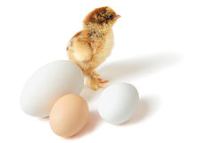 Chick with eggs Royalty Free Stock Photo