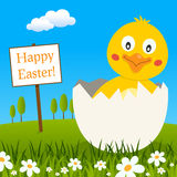 Chick into Eggshell Wishing a Happy Easter Royalty Free Stock Images