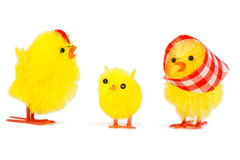 Chick family Royalty Free Stock Photos