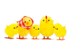 Chick family Stock Image