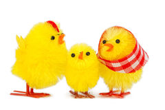 Chick family Royalty Free Stock Photography