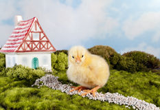 Chick with fantasy house Stock Image