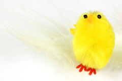 Chick and feather Royalty Free Stock Photography