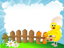 Chick and fence Stock Photos