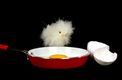 Chick with fried egg Stock Images