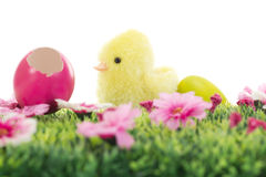 Chick on grass with flowers and Easter eggs Royalty Free Stock Image