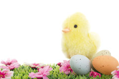 Chick on grass with flowers and Easter eggs Stock Photo
