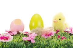 Chick on grass with flowers and easter eggs Stock Image