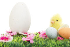 Chick on grass with flowers and easter eggs Stock Images