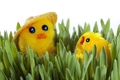 Chick on green grass Stock Image